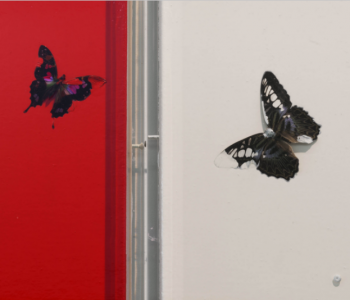 The personal exhibition of Damien Hirst