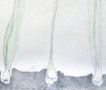 Выставка Дарьи Кротовой «Сбор дождя»