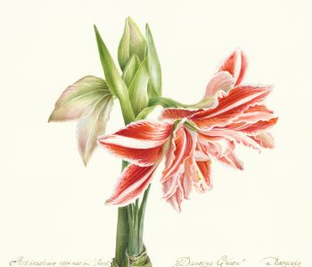 «Исчезающая красота. Растения «Красной книги»