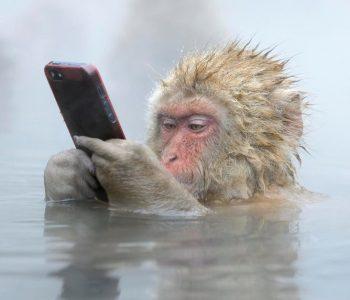 Медиаторская экскурсия по выставке «Интернет животных»