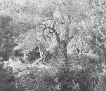 Дина Щедринская. Картины природы