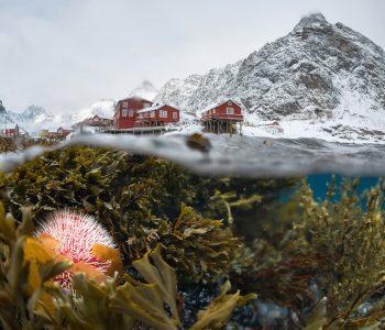 NATURE PHOTO EXP. Выставка фотографов дикой природы