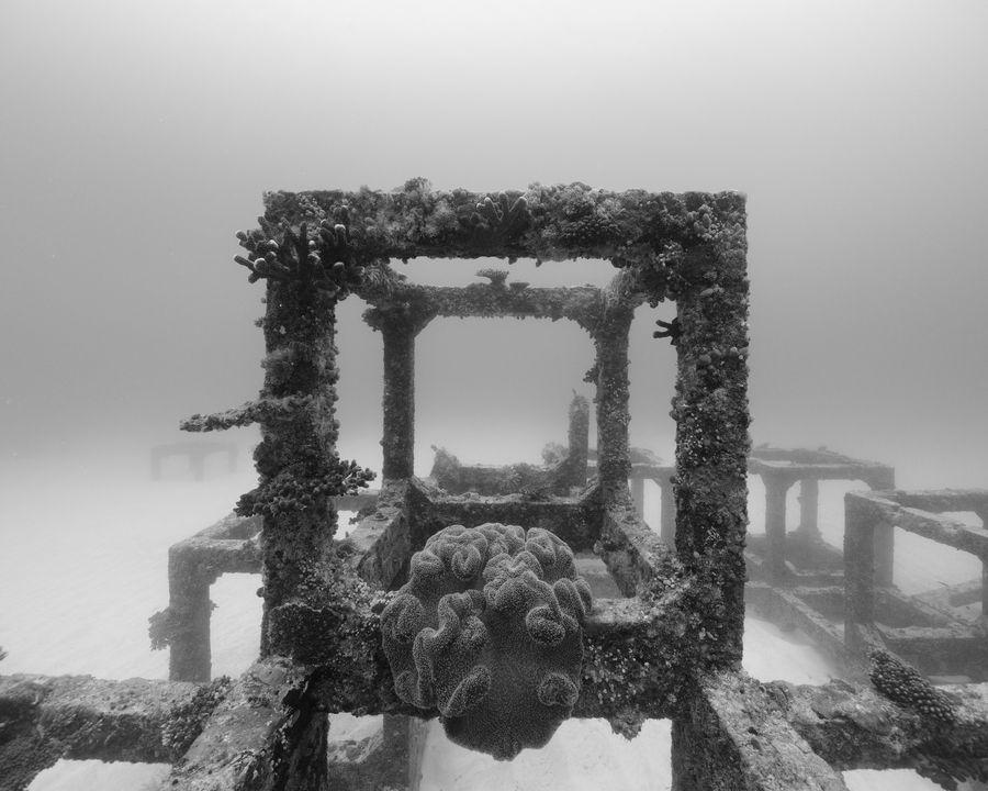Николя Флок. Подводные пейзажи